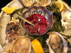 zealand oysters